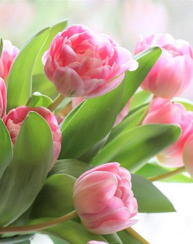 Fleuriste à Briec