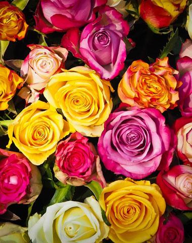 Livraison de fleurs - Briec